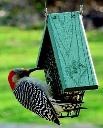 Going Green Recycled Plastic Suet Feeder