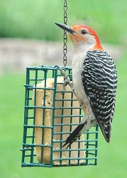 Audubon Single Suet Cake Feeder Set of 3