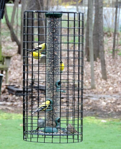 "Clever Clean Tube Feeder 24"" with Squirrel Cage"