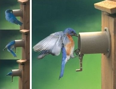 Original Screw-On Bird Guardian Birdhouse Protector