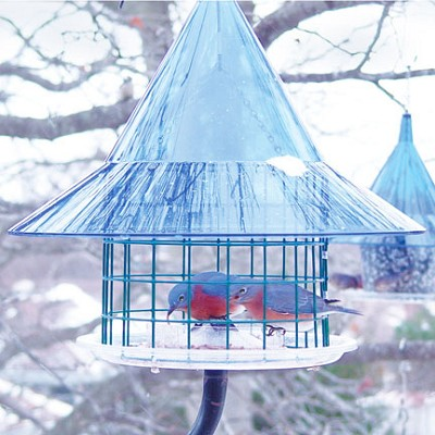 Sky Cafe Caged Bluebird Feeder