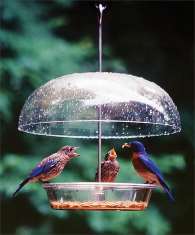 Aspects Vista Dome Bird Feeder