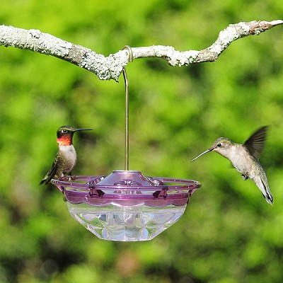 HummBlossom Mini Hummingbird Feeder 4 oz. Plum
