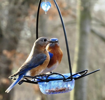 Bluebird Flower Dish Feeder Set of 2