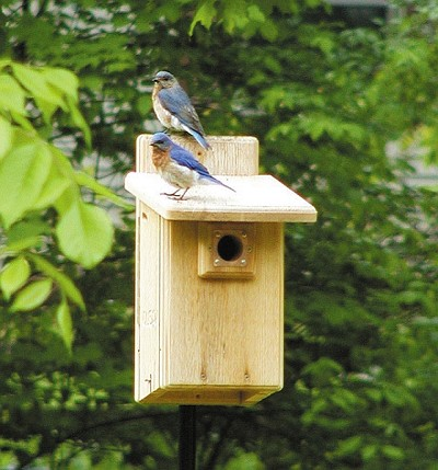 Birds Choice Ultimate Bluebird House w/Viewing Window
