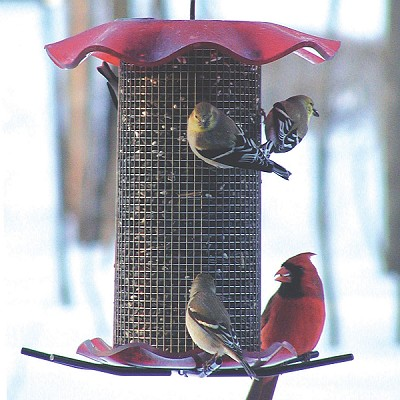 Forever Seed Feeder 3 Quart Red