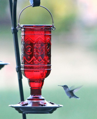 Jewel Red Hummingbird Feeder 20 oz.