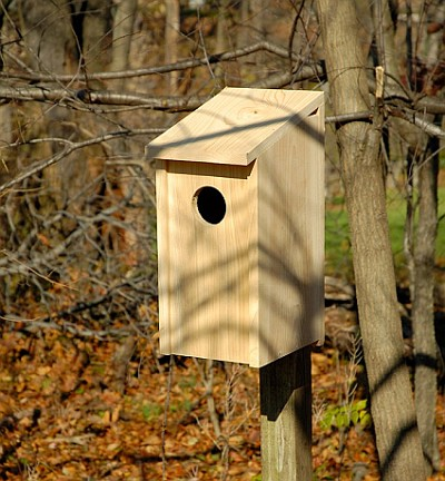 Screech Owl Joy Box For Nesting Screech Owls