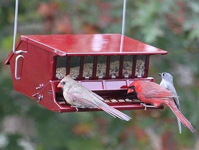 Bird Lover's Choice Squirrel-Proof Feeder Red