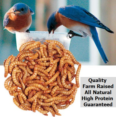Bluebirds love live mealworms!