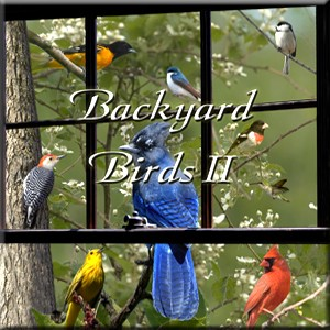 Backyard Birds II CD