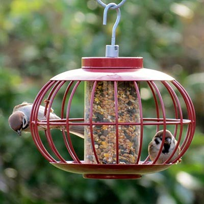 Nuttery Chinese Lantern Caged Seed Feeder