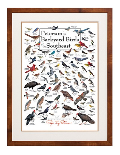 Peterson's Backyard Birds of the Southeast Wall Poster