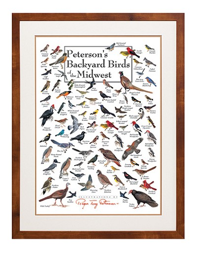 Peterson's Backyard Birds of the Midwest Wall Poster
