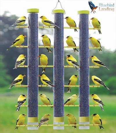 Finches Favorite 3 Tube Feeder Yellow