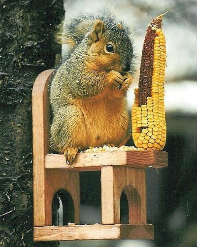 Cedar Squirrel Chair Feeder