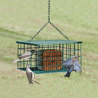 Squirrel Resistant Suet Palace