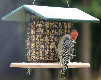 Recycled Plastic Seed and Suet Block Feeder