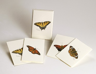 Butterfly Boxed Notecard Assortment Set of 8