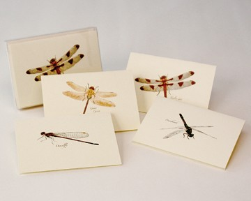 Dragonfly and Damselfly Boxed Notecard Assortment Set of 8