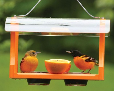 Birds Choice Recycled Plastic Oriole Feeder with Hanging Cable