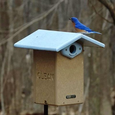 Recycled Plastic Ultimate Bluebird House w/Viewing Window