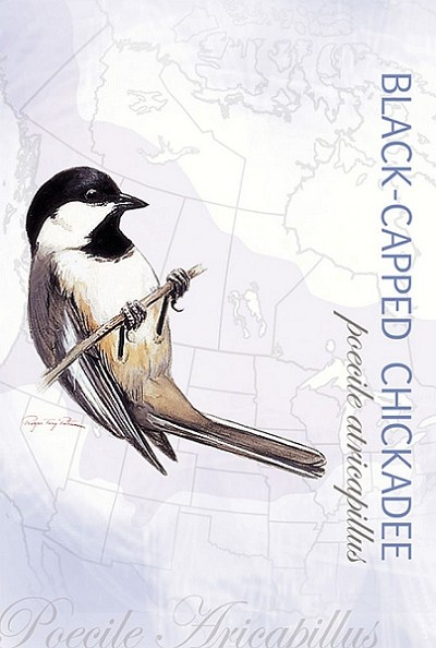 Black-Capped Chickadee Eco Notes Set of 12