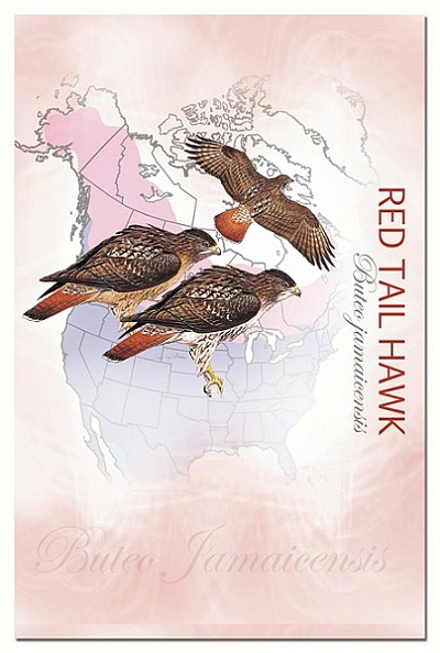 Red Tail Hawk Eco Notes Set of 12