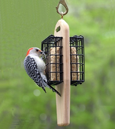 Birds Choice Double Cake Tail-Prop Feeder