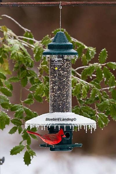 Squirrel Buster Plus Bird Feeder Weather Guard